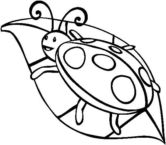 Free coloring and drawings Ladybug on leaf Coloring page