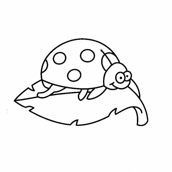 Free coloring and drawings Ladybug on tree leaf Coloring page