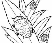 Coloring pages Ladybugs by all