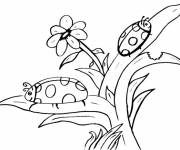Coloring pages Ladybugs having fun