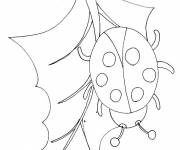 Coloring pages Lucky Ladybug
