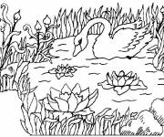 Coloring pages Duck on Lake