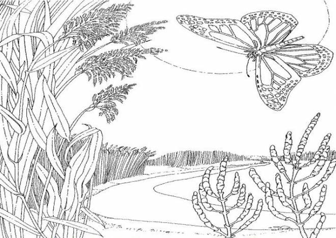 Free coloring and drawings Lake and Nature Coloring page