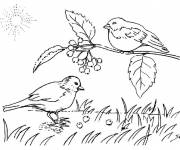 Coloring pages Birds sing in the countryside