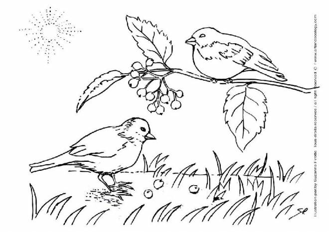 Free coloring and drawings Birds sing in the countryside Coloring page
