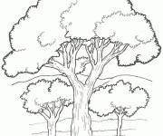 Coloring pages Black vector trees