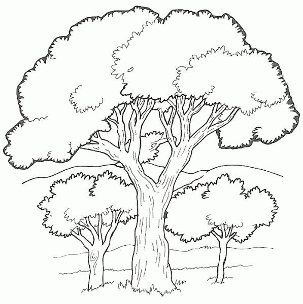 Free coloring and drawings Black vector trees Coloring page