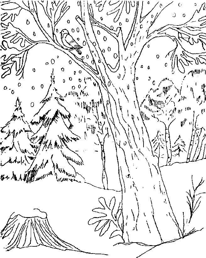 Free coloring and drawings Snow falls in the Forest Coloring page