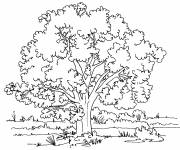 Coloring pages Tree landscape in the countryside
