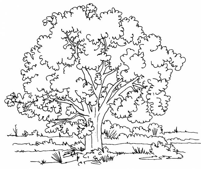 Free coloring and drawings Tree landscape in the countryside Coloring page