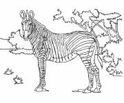 Free coloring and drawings Zebra in the Forest Coloring page
