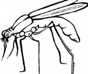 Free coloring and drawings Black and white mosquito Coloring page