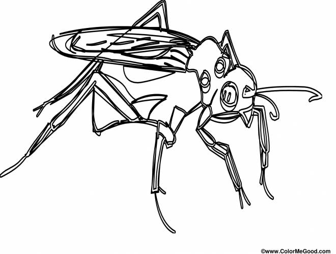 Free coloring and drawings Color insect mosquito Coloring page