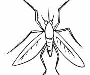 Free coloring and drawings Easy front view mosquito Coloring page