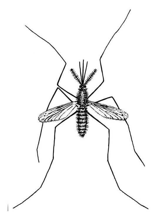 Free coloring and drawings Insect mosquito in color Coloring page