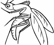 Coloring pages Maternal mosquito