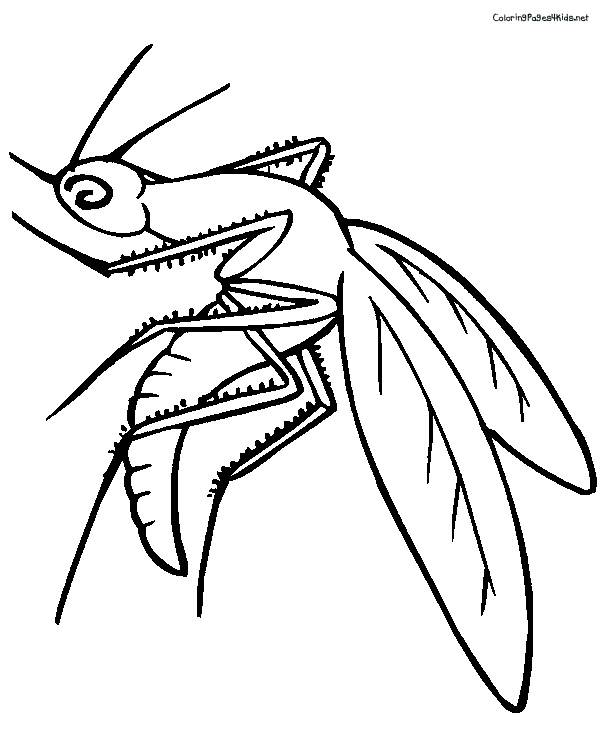 Free coloring and drawings Maternal mosquito Coloring page