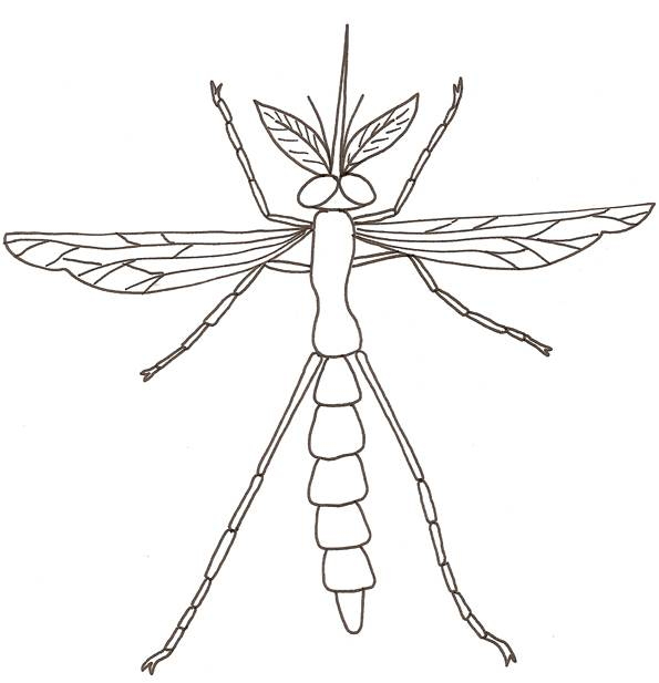 Free coloring and drawings Mosquito front view Coloring page