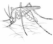 Coloring pages Mosquito on the skin