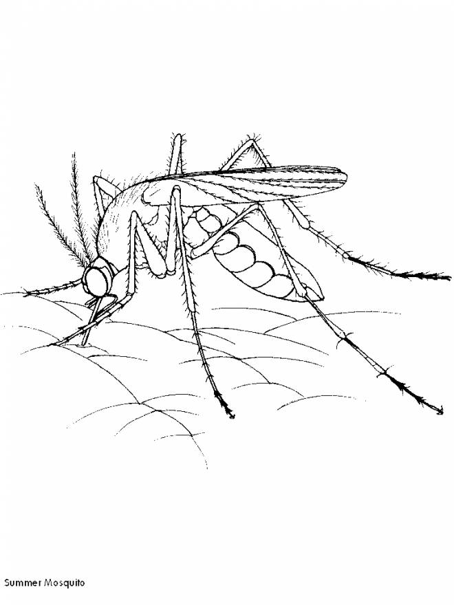 Free coloring and drawings Mosquito on the skin Coloring page