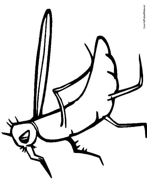 Free coloring and drawings Mosquito rests Coloring page