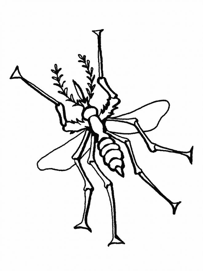 Free coloring and drawings Mosquito stylized insect Coloring page