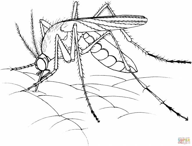Free coloring and drawings Mosquito sucking Coloring page