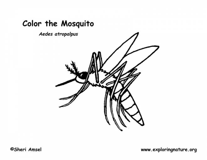 Free coloring and drawings Mosquito sucks blood Coloring page