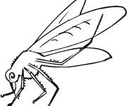 Coloring pages Mosquito sucks color