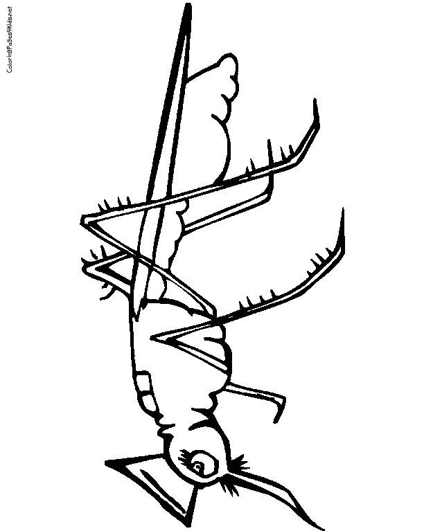 Free coloring and drawings Mosquito with beautiful eyes Coloring page