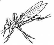 Coloring pages Realistic mosquito insect