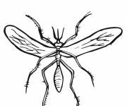 Coloring pages Simple adult mosquito