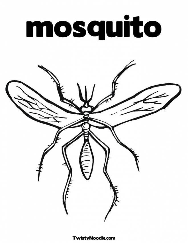 Free coloring and drawings Simple adult mosquito Coloring page