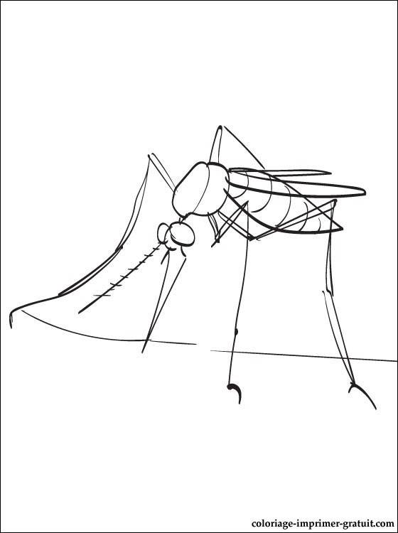 Free coloring and drawings Simple mosquito Coloring page