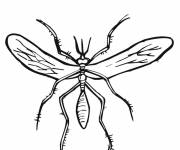 Coloring pages The structure of Mosquito