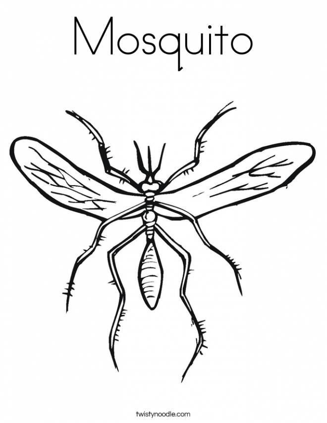 Free coloring and drawings The structure of Mosquito Coloring page