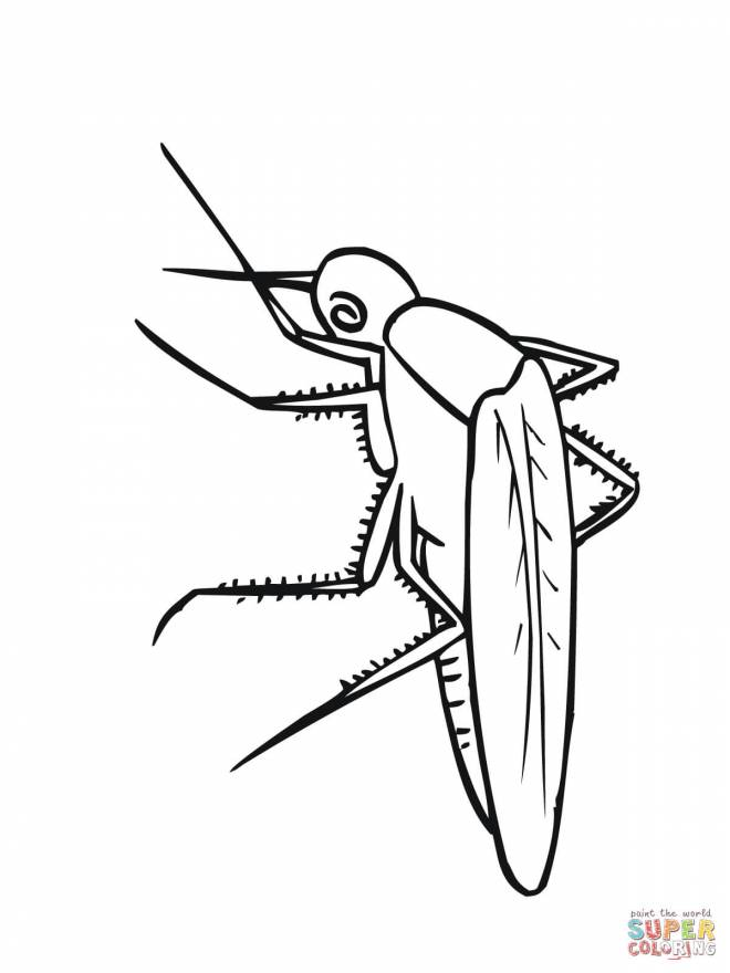 Free coloring and drawings Vector mosquito to download Coloring page