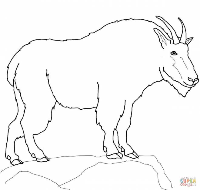 Free coloring and drawings Mountain animal to color Coloring page