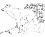 Coloring pages Mountain wolf