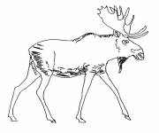 Coloring pages The Easy Deer