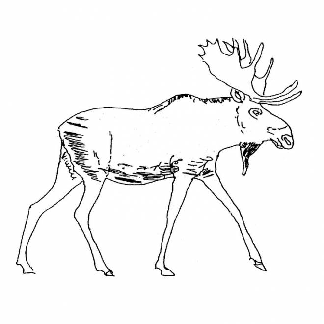 Free coloring and drawings The Easy Deer Coloring page