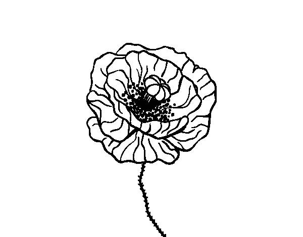 Free coloring and drawings A small poppy plant Coloring page