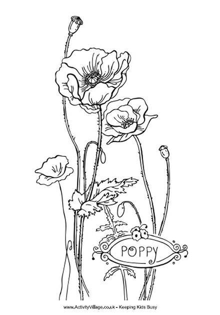 Free coloring and drawings Beautiful Poppy Flower Coloring page