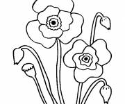 Coloring pages Blooming Poppy