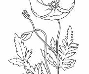 Coloring pages Difficult poppies