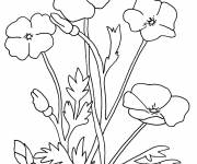 Coloring pages Flower and Plant