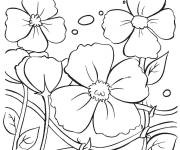 Coloring pages Flowering poppy plant