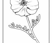 Coloring pages Framed poppy