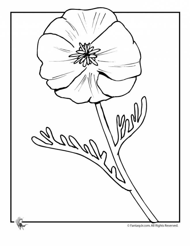 Free coloring and drawings Framed poppy Coloring page