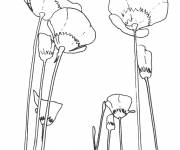Coloring pages Maternal poppy